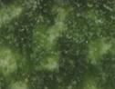 Tannenzweig Winterfrüchte